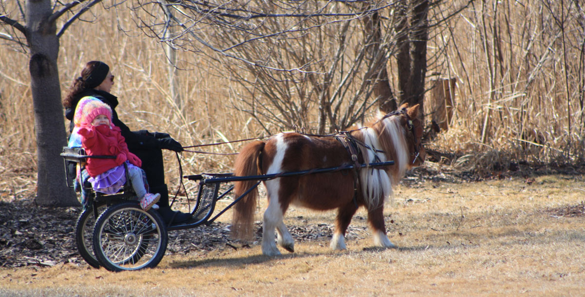 kid-in-cart